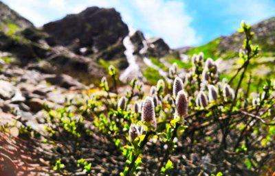 Природа водопада Когутай