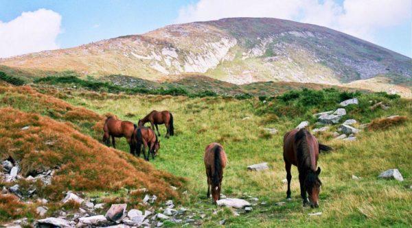 Черкесские лошадки
