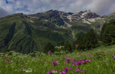 Альпийские луга Приэльбрусья